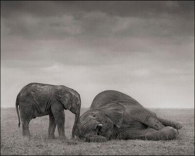 Nick Brandt, 'Two Elephants, Amboseli', 2012