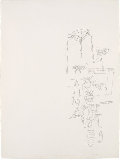 Jean-Michel Basquiat, 'Untitled (Insect Order)', circa 1982-1983