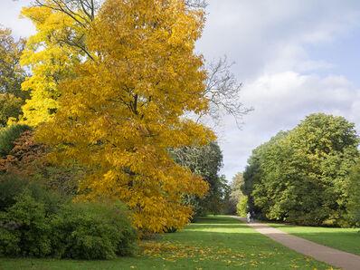 Simon Roberts, 'The National Arboretum, Westonbirt, Gloucestershire, 2013', 2013