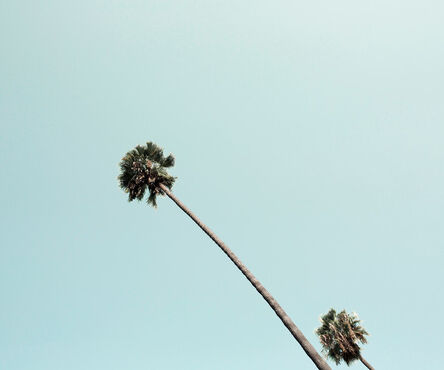 Ludwig Favre, 'Beverly Hills Palm', 2020