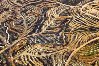 Daniel Beltrá, 'Indonesia new palm terraces (#9)', 2009