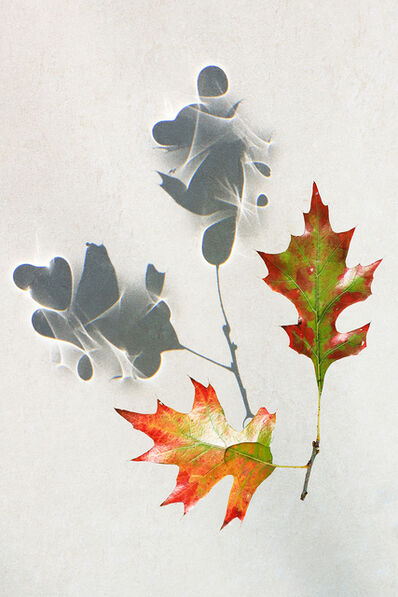 Larry Garmezy, 'Dancing Leaves #2 - Botanical, Floral photography, abstract waterscape, autumn leaves, fine art photography, shadows, minimalist, serene, relaxing', 2020