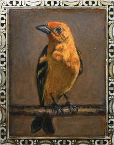 Ed Musante, 'Western Tanager / A. Fuente'