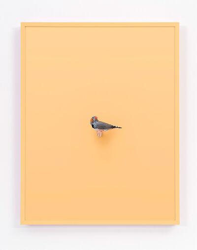 Daniel Handal, 'Zebra Finch (Buttercup)', 2017