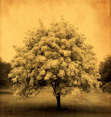 Joyce Tenneson, 'Glowing Tree'