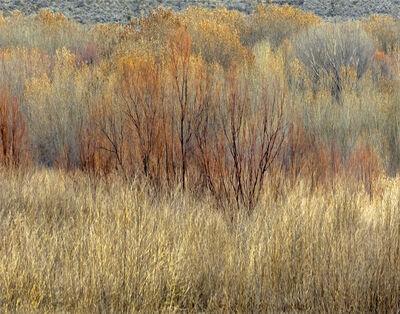 John Isaac, 'Landscape II', 2016