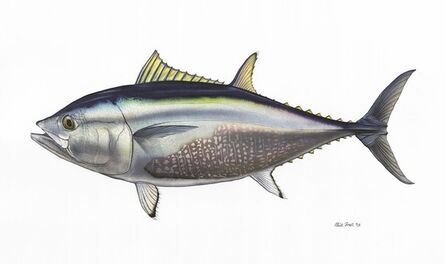 Flick Ford, 'Bluefin Tuna', 2014