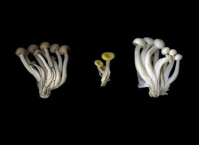 Achim Mohné, 'Pilze (Fungus)', 2017