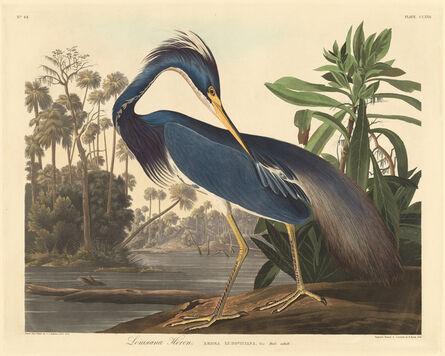 Robert Havell after John James Audubon, 'Louisiana Heron', 1834