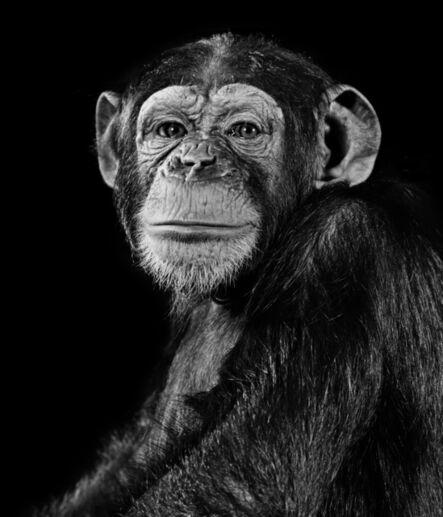 Walter Schels, 'Chimpanzee', 1992
