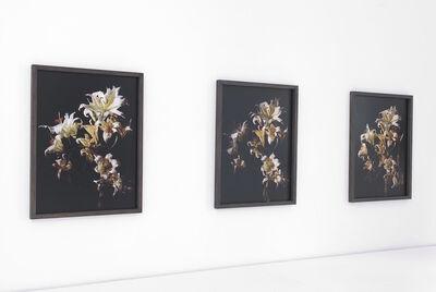 Uwe H. Seyl, 'Lilies', 2010