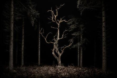 Jasper Goodall, 'Twilight #34, Danse Macabre', 2020