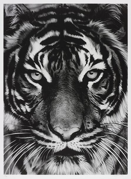 Robert Longo, 'Tiger', 2011
