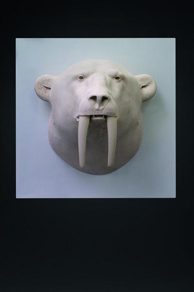 Mauro Corda, 'Tête ours - morse', 2015