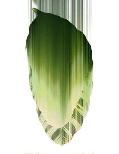 Andrea Wolf, 'Musa Acuminata Tropicana, var. 013', 2020