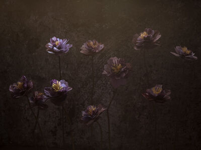 Shane Lavalette, 'Untitled', 2016