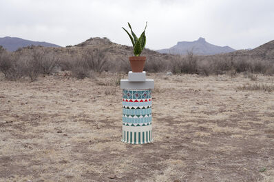 Florian Slotawa, 'Local Plants (Snake Plant)', 2012