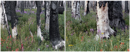 Laura McPhee, 'Evening (Spruce Trees, Indian Paintbrush, Fireweed, Daisies), Fourth of July Creek Canyon, Custer County, Idaho (Diptych) 1/5'