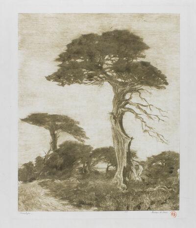 Perham Wilhelm Nahl, 'Monterey Cypress', 1914
