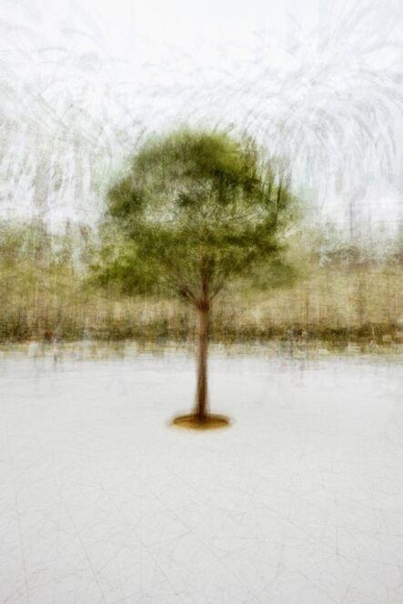 Jacob Gils, 'Palma #3', 2012