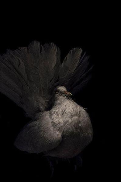 Lucas Lenci, 'Oiseau I'