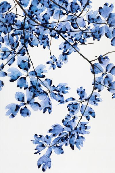 Jackie Battenfield, 'Windy Blue', 2016