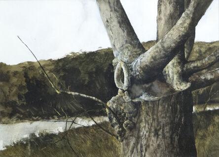 Gregory Sumida, 'Tree Trunks', 1971