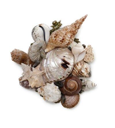 Claire Begheyn, 'Small Shell Series 31'
