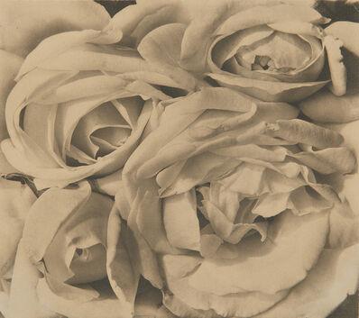 Tina Modotti, 'Roses, Mexico', 1924