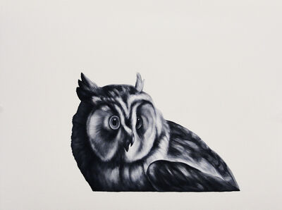 Shelley Reed, 'Owl (after Duranti)'