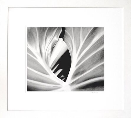 Iran Issa Khan, 'The Leaf', 2000