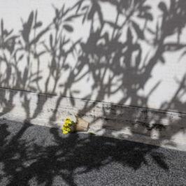 Jay Seawell, 'National Memorial Cemetery of the Pacific, Honolulu, HI', 2013