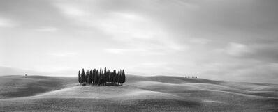 Brian Kosoff, 'Tuscan Trees', 2007