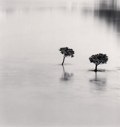 Michael Kenna, 'Two Mangrove Plants, Lantau Island, Hong Kong', 2007