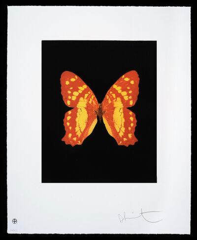Damien Hirst, 'Butterfly – Portrait – Emerge', 2012