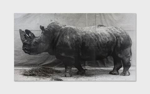 Balthasar Burkhard, 'Rhinocéros', 1995