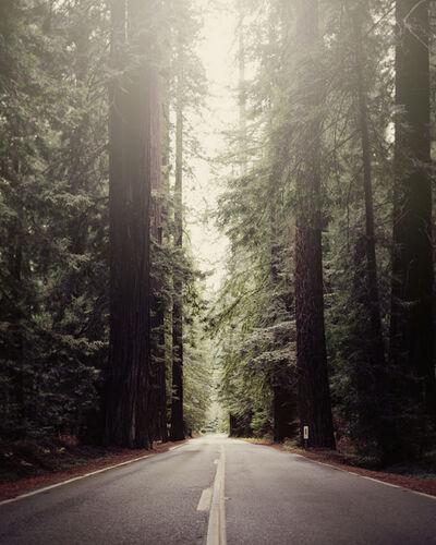 LM Chabot, 'Humbolt Redwoods, CA 02', ca. 2010