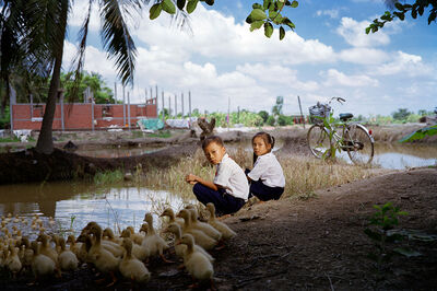 Pipo Nguyen-duy, 'Duck Pond (Couple)', 2013