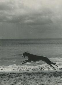 Bill Brandt, 'Dog on the beach, nd'