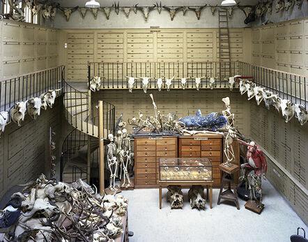 Richard Barnes, 'Collection RM MCA, Paris FR. Animal Logic', 2005
