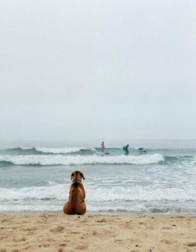 Michael Dweck, 'Surf Dog, Montauk', 2002