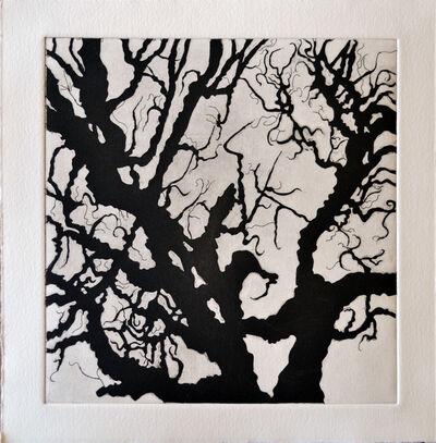 Nate Cassie, 'Tree Series: Normana III', 2011