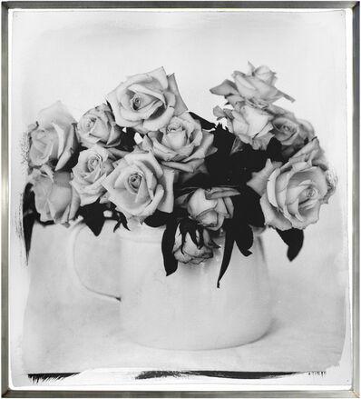 Stephen Inggs, 'Roses, Overberg II', 2003