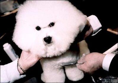 Matthew Murray, 'Crufts Dog Show, Birmingham', ca. 2005