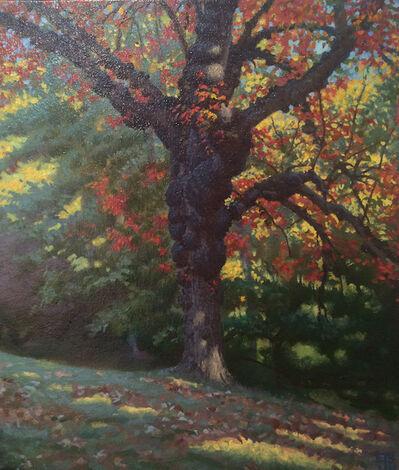 Ed Stitt, 'Gnarled Tree, Sunny', 2014