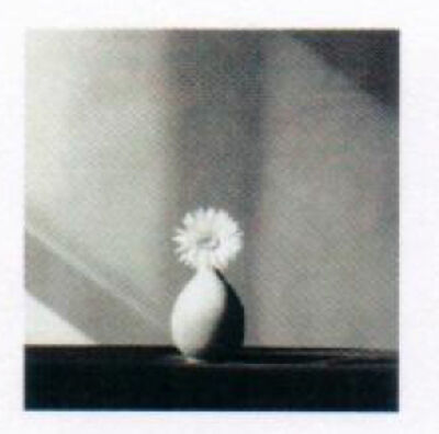 Robert Mapplethorpe, 'African deisy', 1982