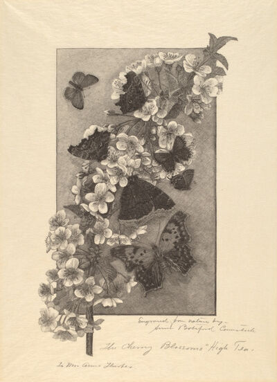 Anna Botsford Comstock, 'The Cherry Blossoms - High Tea', ca. 1890