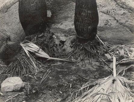 Edward Weston, 'Palm Canyon, Borrego Desert (B-PC-9G)', 1937