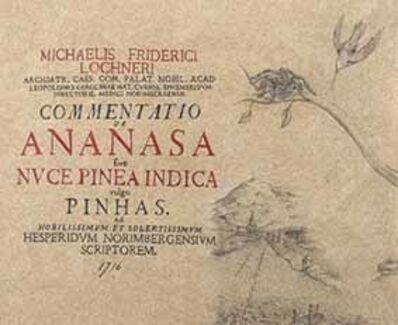 Andres Matias Pinilla, 'Commentatio de Ananasa', 2016