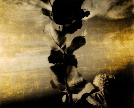 Aramasa Taku, 'Visible Transfiguration 2003 (Printed 2012) OROgraphy (digital-positives)', 2003